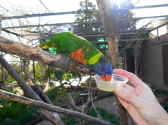 Monte casino bird park fees