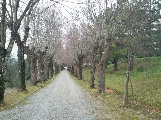 Borgo Di Colleoli Resort Tuscany: Viale Alberato