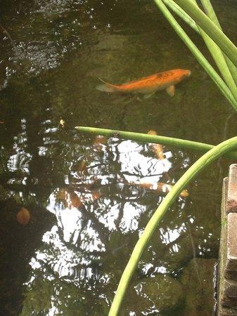 Gerhana Sari 2 Hotel: garden fish