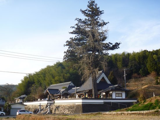 Kagamino-cho, Japonia: 寺の全景と大銀杏