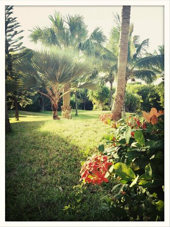 Royalton Hicacos Varadero Resort & Spa: Espaces verts