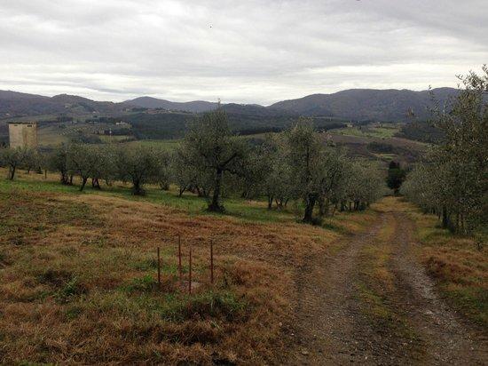 Agriturismo La Presura: Beautiful grounds