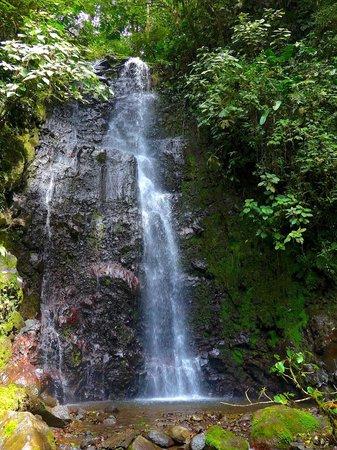 Sky Adventures - Arenal Park: waterfall on jungle trek
