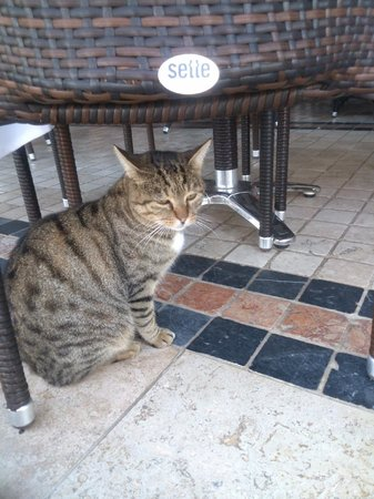 Hotel Letoon: Neighborhood cat - waiting for a bite of breakfast :)