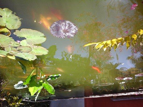 Vallarta Botanical Gardens: estanque