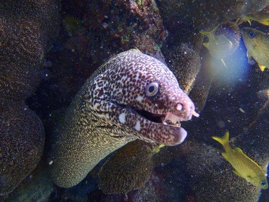 Dressel Divers : Unreal Underwater Photos