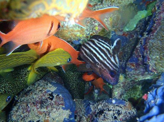 Dressel Divers: Underwater Photos