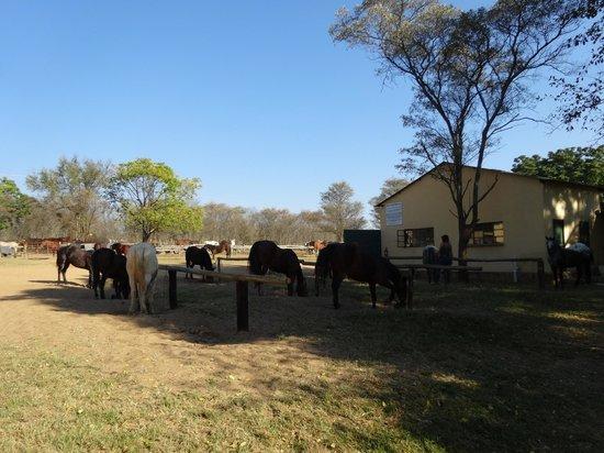 Horizon Horseback Adventures Lodge: Hof