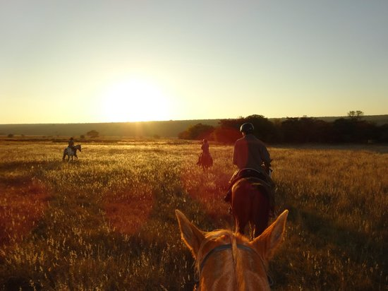 Horizon Horseback Adventures Lodge: Ausritt