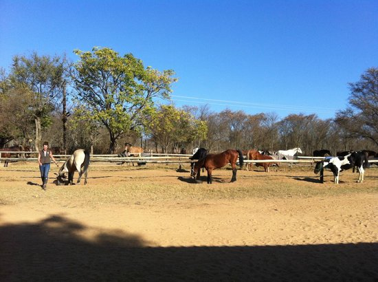 Horizon Horseback Adventures Lodge: Hof