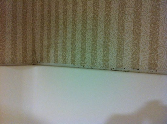 Best Western Plus Cedar Bluff Inn: mold at top of shower
