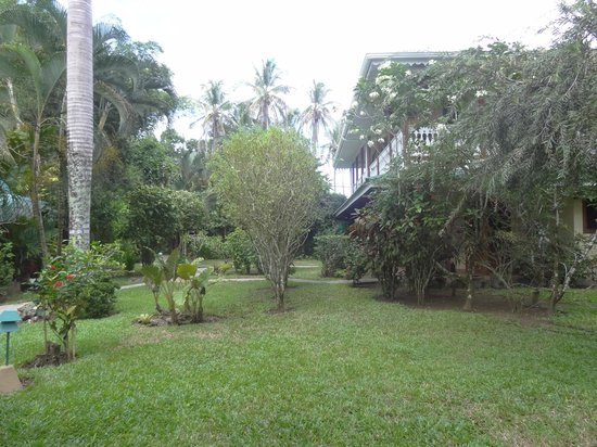 Playa Negra Guesthouse: Gardens