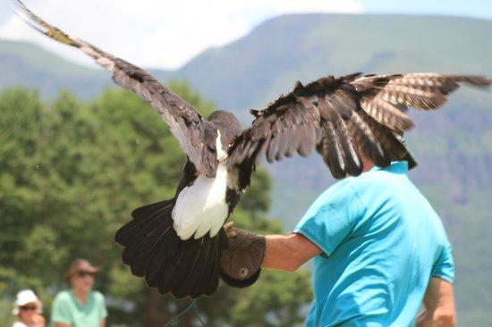 Falcon Ridge Bird of Prey Centre : Bird show