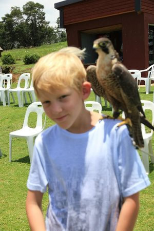 Falcon Ridge Bird of Prey Centre : Interaction