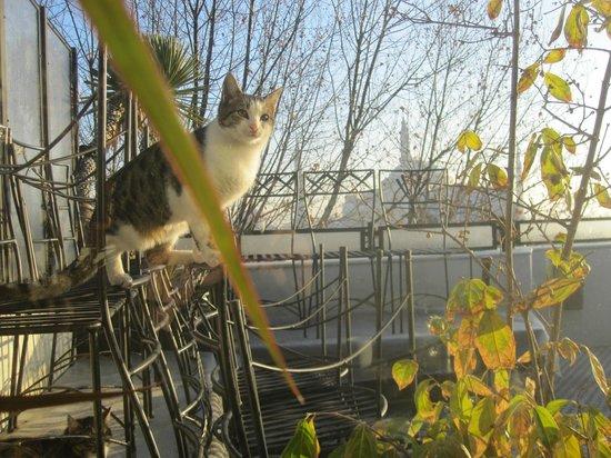 Nomade Hotel : Un petit chat gourmand derrière la baie vitrée :-)