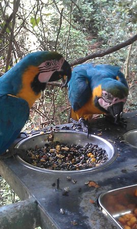 Birds of Eden: Birds feeding on a platform