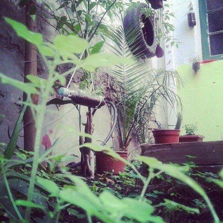 Selknam Hostel: jardín