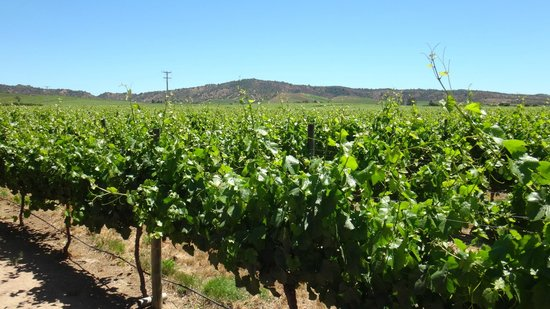 Valle de Casablanca: Casas del Bosque vineyard