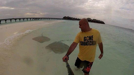 Huvafen Fushi Maldives: Stingray Beach