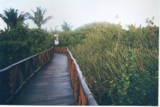 Occidental Grand Cozumel: Walkway to beach and pool