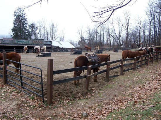 Pinegrove Family Dude Ranch : Awesome Horses