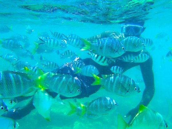 Discovery Agri Tours : Great snorkelling with Alrick.