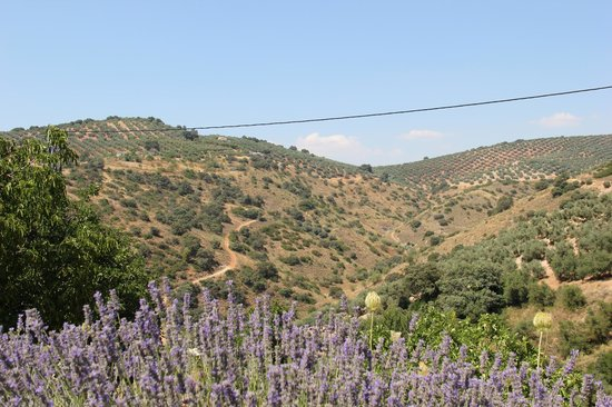 Cortijo Las Rosas: Valley with olive groves right near the house