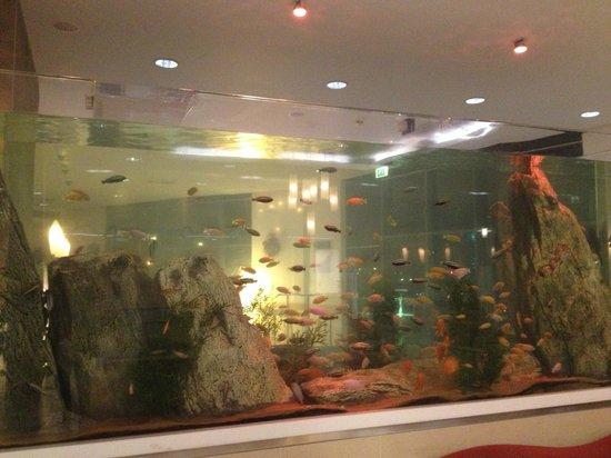 Radisson Blu Waterfront Hotel, Jersey: Hotel fish tank!