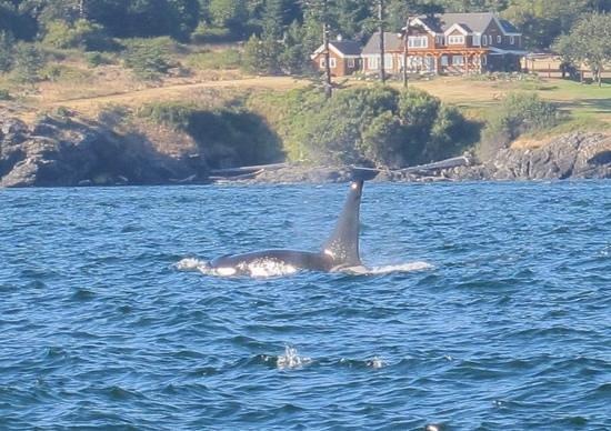Maya's Legacy Whale Watching: amazing