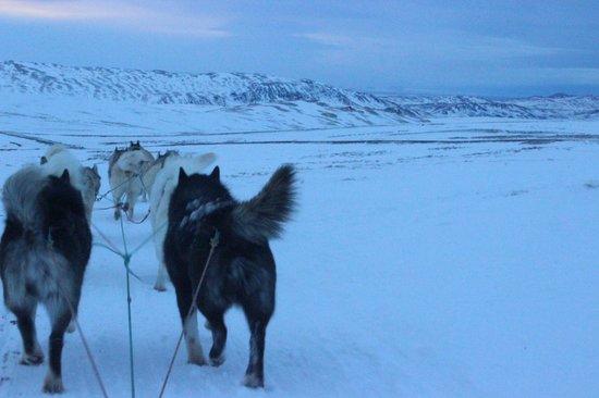 Eskimos - Day Tours : Dog Sledging