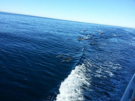 San Diego Whale Watch: Dolphins next to the boat