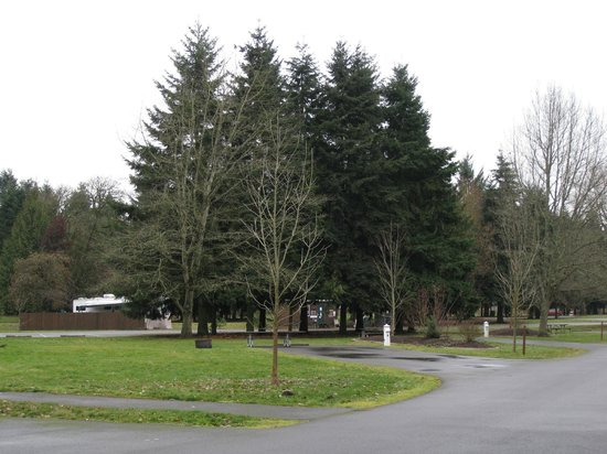 Armitage Park Campground Updated 2017 Reviews Eugene