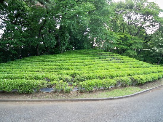 The East Gardens of the Imperial Palace (Edo Castle Ruin): Green tea anyone
