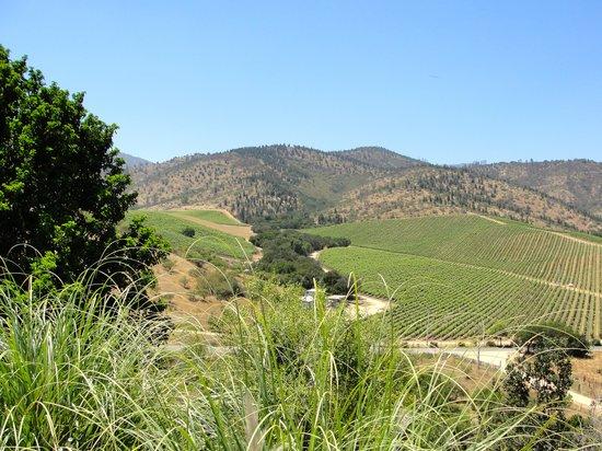 Hotel La Casona de Vina Matetic : Vineyards surrounding the winery.