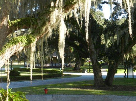 Jekyll Island Club Resort: Spanish moss on the trees