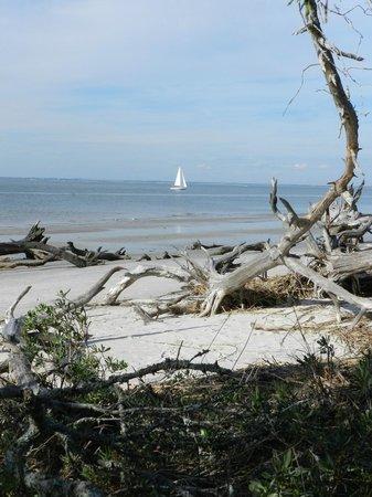 Jekyll Island Club Resort: Awesome views from Driftwood Beach