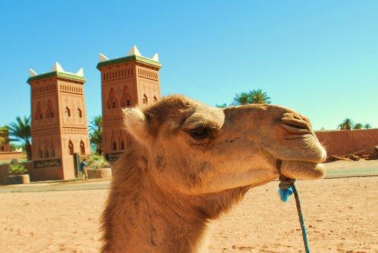 Excursion Prestige Private Day Tours: le 4x4 berbere