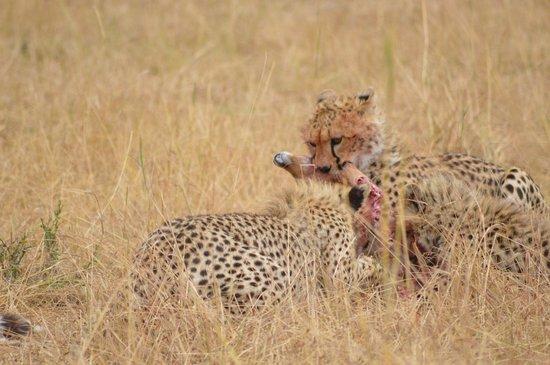 Serengeti Bushtops Camp: Some amazing sights of nature!