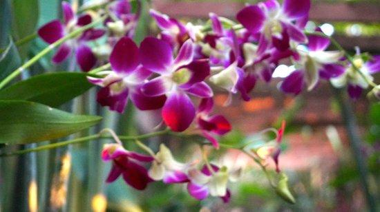 Shewe Wana Boutique Resort and Spa: Beautiful flowers