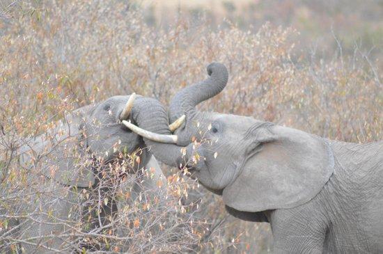 Mara Bushtops : Wildlife aroudn the tent
