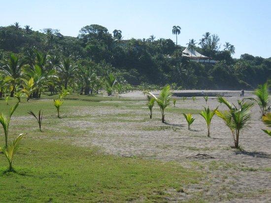 Barceló Montelimar: Plage très large. Les arbres font office de palapas pour de l'ombre.