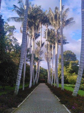 Jardin Botanico de Bogota Jose Celestino Mutis: Al mejor estilo de Hollywood.