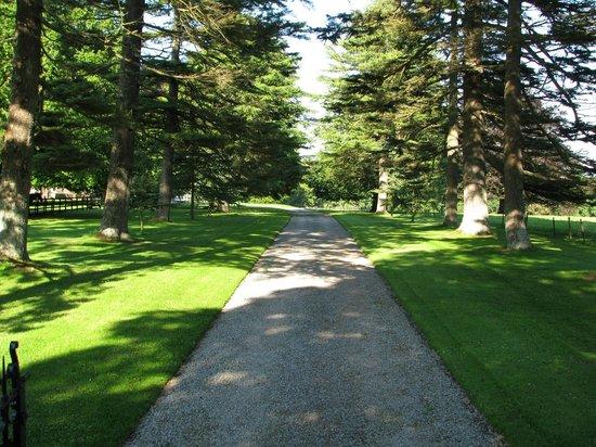 Glenlohane: The main driveway