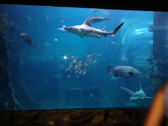 SEA LIFE Melbourne Aquarium: Large viewing window