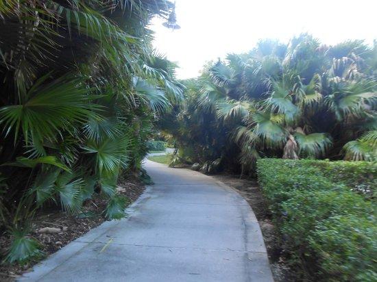 Loews Royal Pacific Resort at Universal Orlando : walkway to Citiwalk