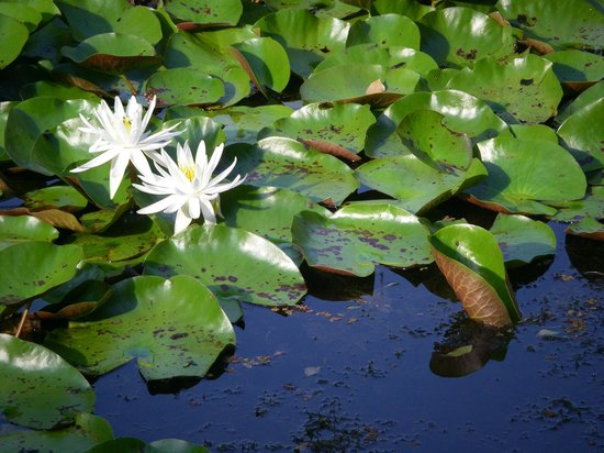 Barney Creek Cottages: Lilly Pads
