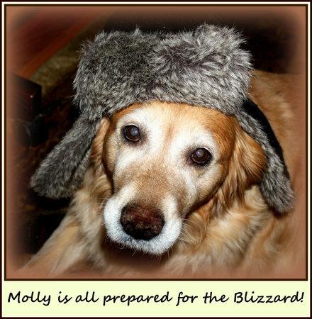 The Clarke House Bed & Breakfast : Molly in her Winter Hat!