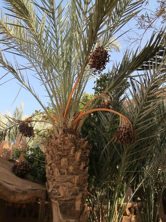 Auberge  Derkaoua: right by the doors and in the outdoor dining area trees and flora in profusion despite the deser