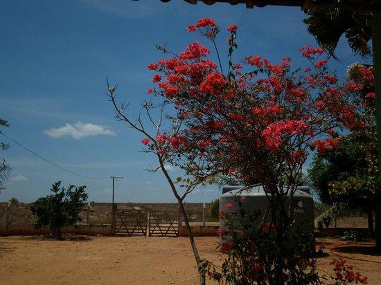 Potengi, CE: Fazenda no açude Pau Preto