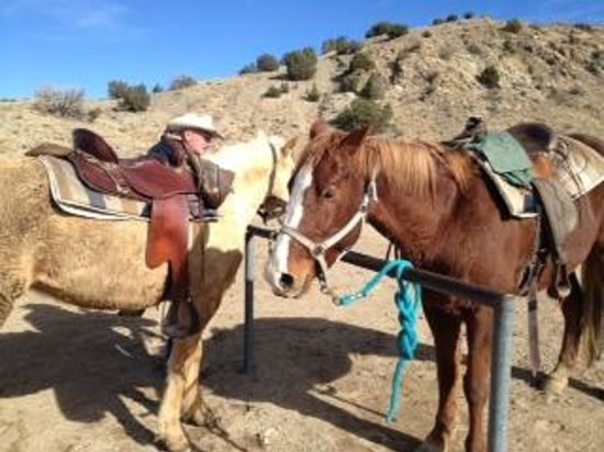 Broken Saddle Riding Company : Our horses